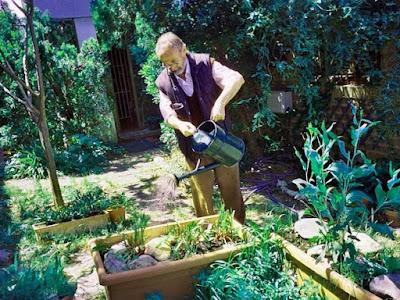 ventajas de plantas en casa