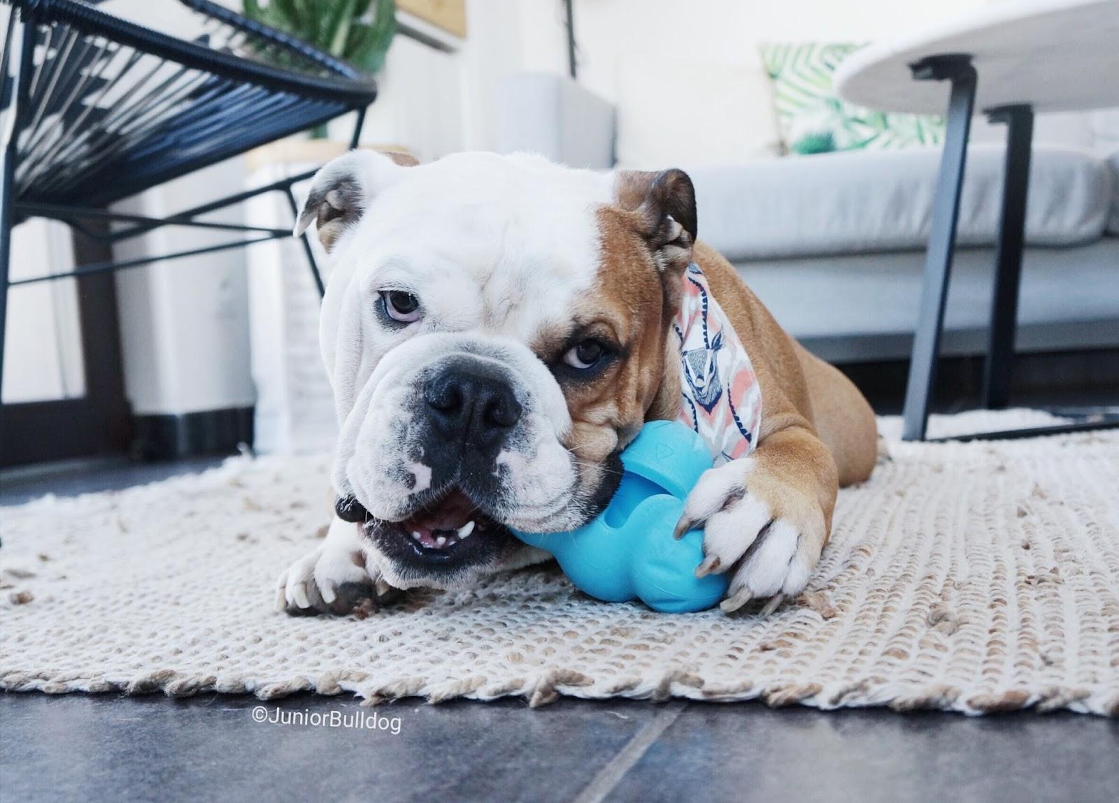 Jouet à mâcher très résistant pour chien Zogoflex Tux