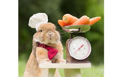 Easy Rabbit Treats Recipes