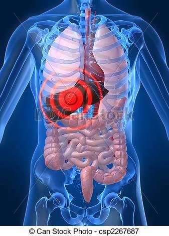 Anatomía radiológica – Abdomen y pelvis : Abdomen y Pelvis