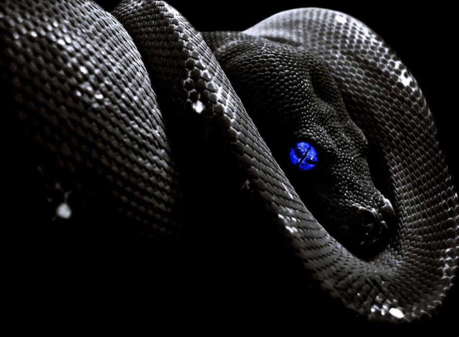 Black Snake Wallpaper Hd   Wallpapers Gallery