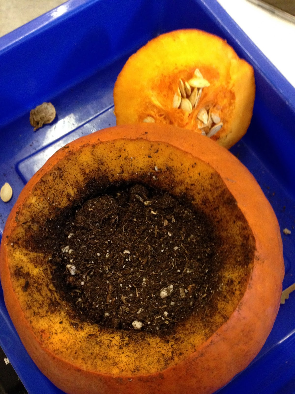 pumpkins, kindergarten science, October, halloween