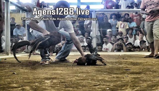 S1288 Live, Sabung Ayam Online S128 Di Indonesia