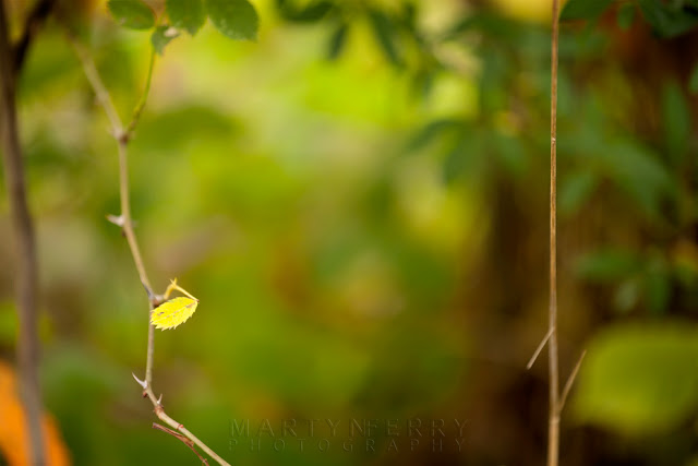 Close up image of a yellow leaf and twig at Monks Wood