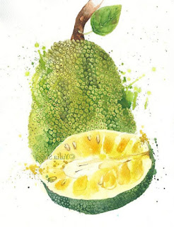 Jackfruit sketch