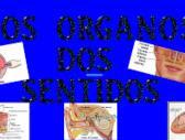 Órganos sentidos