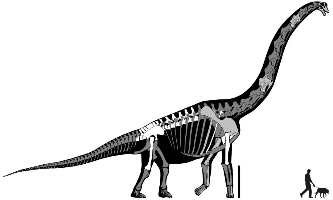 Fundacion Dinosaurios Cyl: Estudian un dinosaurio de cuello ...
