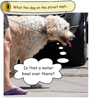 http://dogsarefun.club/2016/08/01/these-days-a-dog-on-the-street-gets-awful-thirsty/