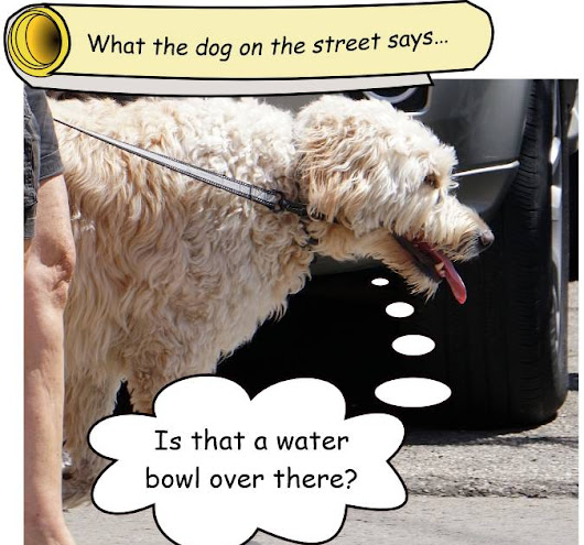 Thirsty days for the dog on the street