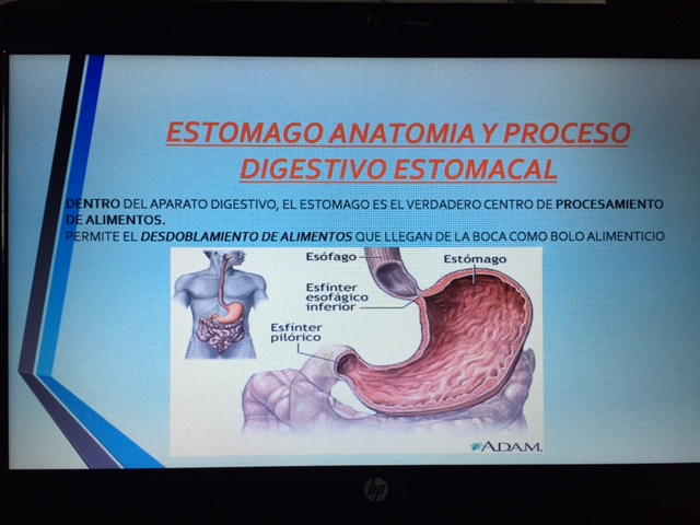 Blog 3º Bachillerato A: POWER POINT ANATOMIA Y FISIOLOGIA DEL ...