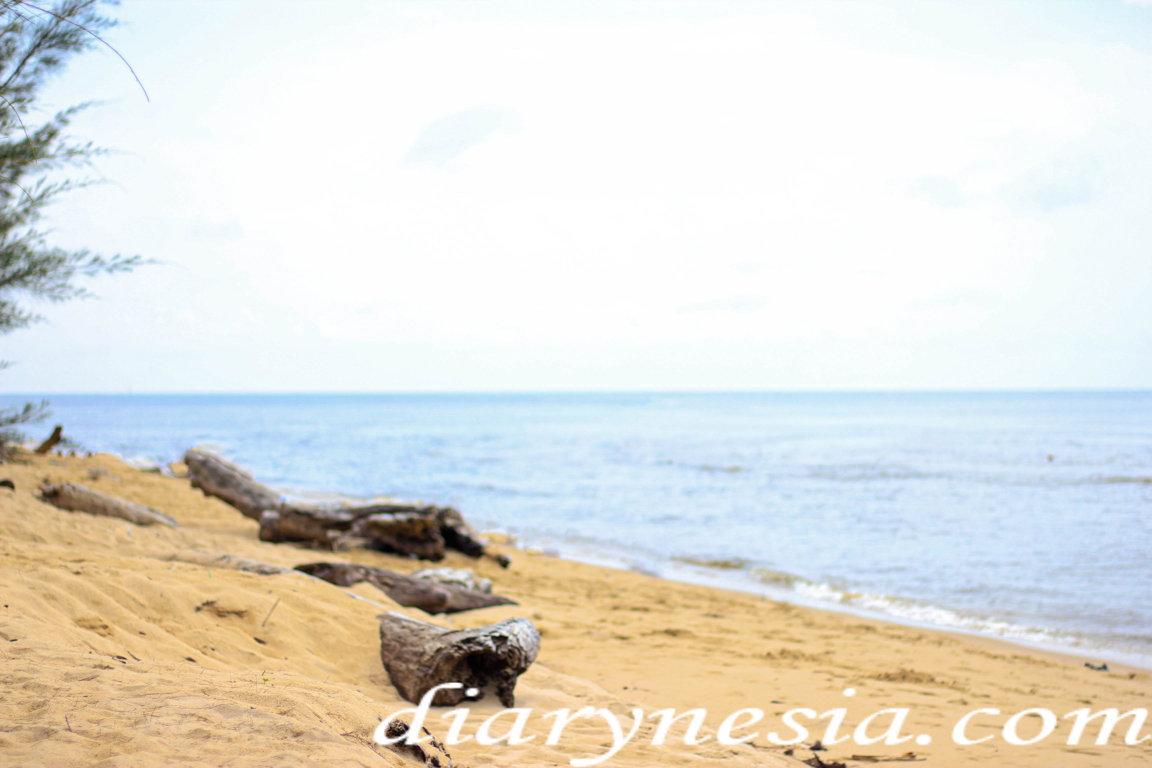 Central borneo tourism, orangutan tours, tourism object of central kalimantan, diarynesia