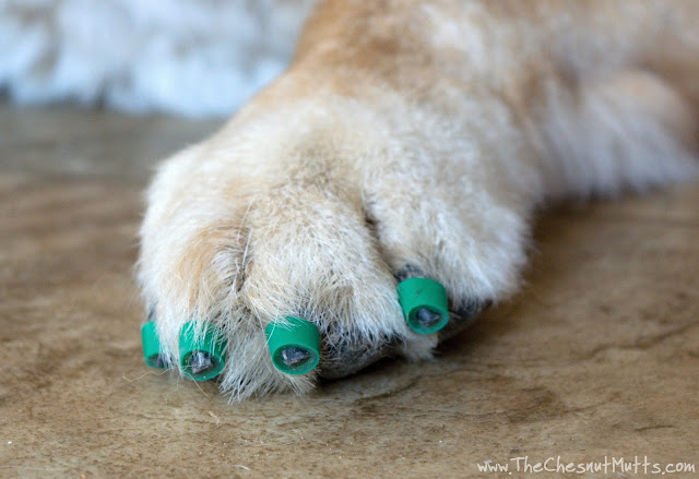 Dr. Buzby's ToeGrips for senior dogs