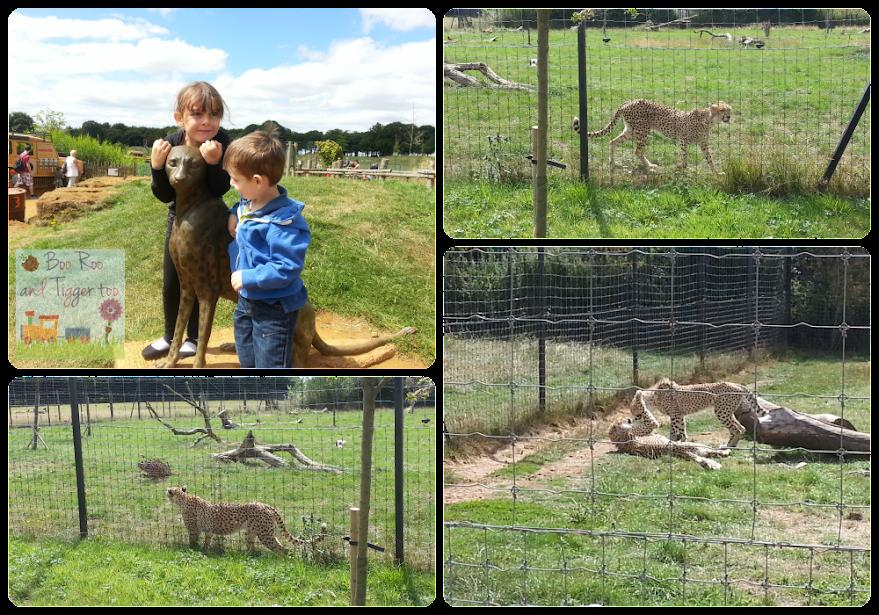 ZSL Whipsnade Zoo - Cheetahs