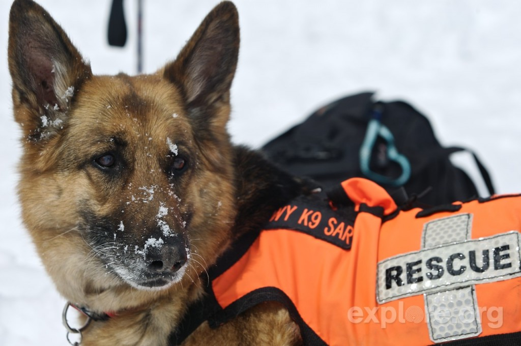 Search And Rescue Training For Dogs Near Me