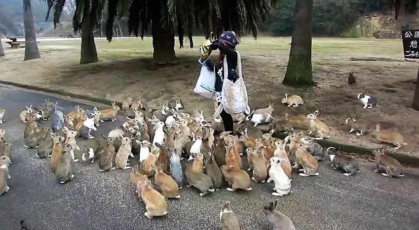 Girl vs Japanese Rabbits