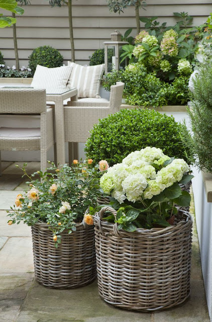 A Basket full of Boxwoods