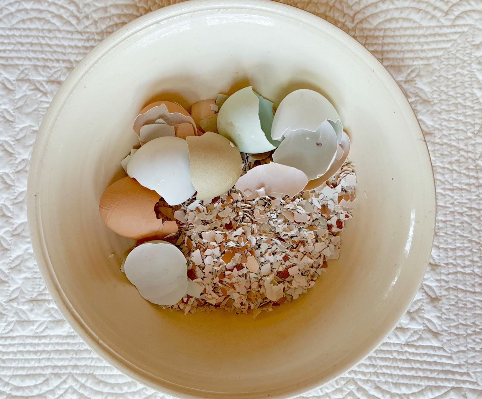 Crushed eggshells as a free calcium source for your chickens feed store bought eggshells or the shells from a friend or neighbors flock because they can contain bacteria that your hens are not accustomed to forumfinder Gallery