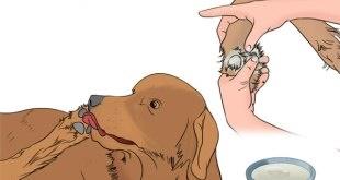 remedios caseros contra lamido de patas en perros