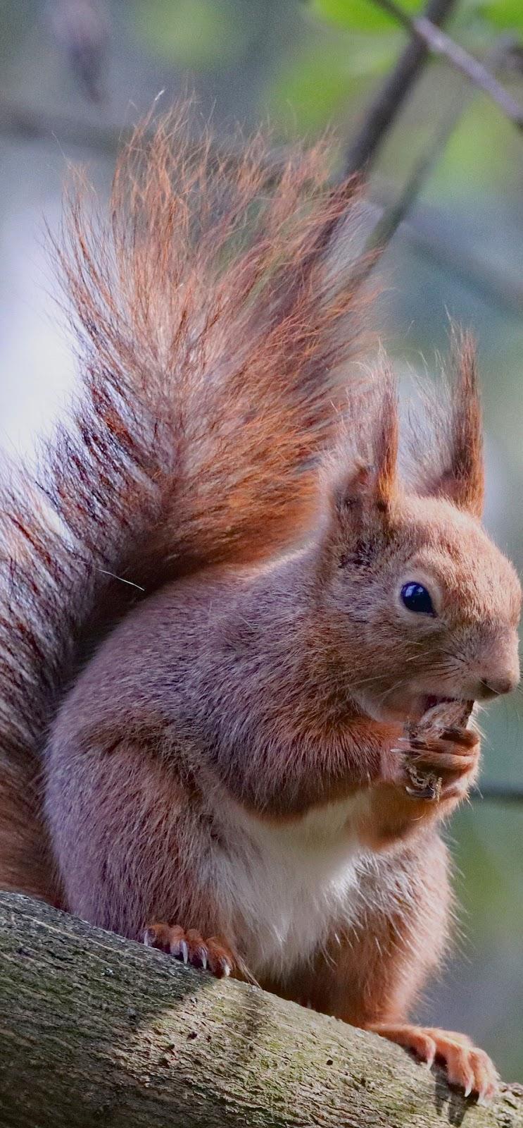 A squirrel feeding.