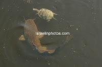 Хула́ — озеро в Израиле, в 20 км к северу от Тивериадского озера
