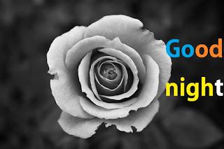 good night rose white