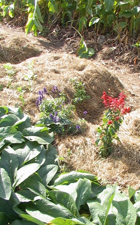 Edible And Ecological Windbreaks To Support Home And Garden Our