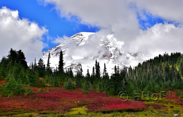 Mt. Rainier displaying Fall Color