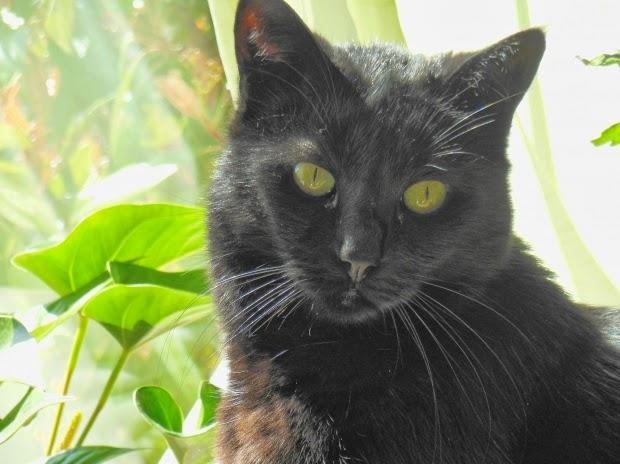 velika crna maca u gaćicama