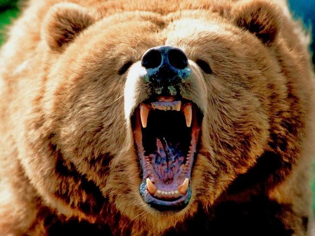 Foto met een brullende grizzlybeer