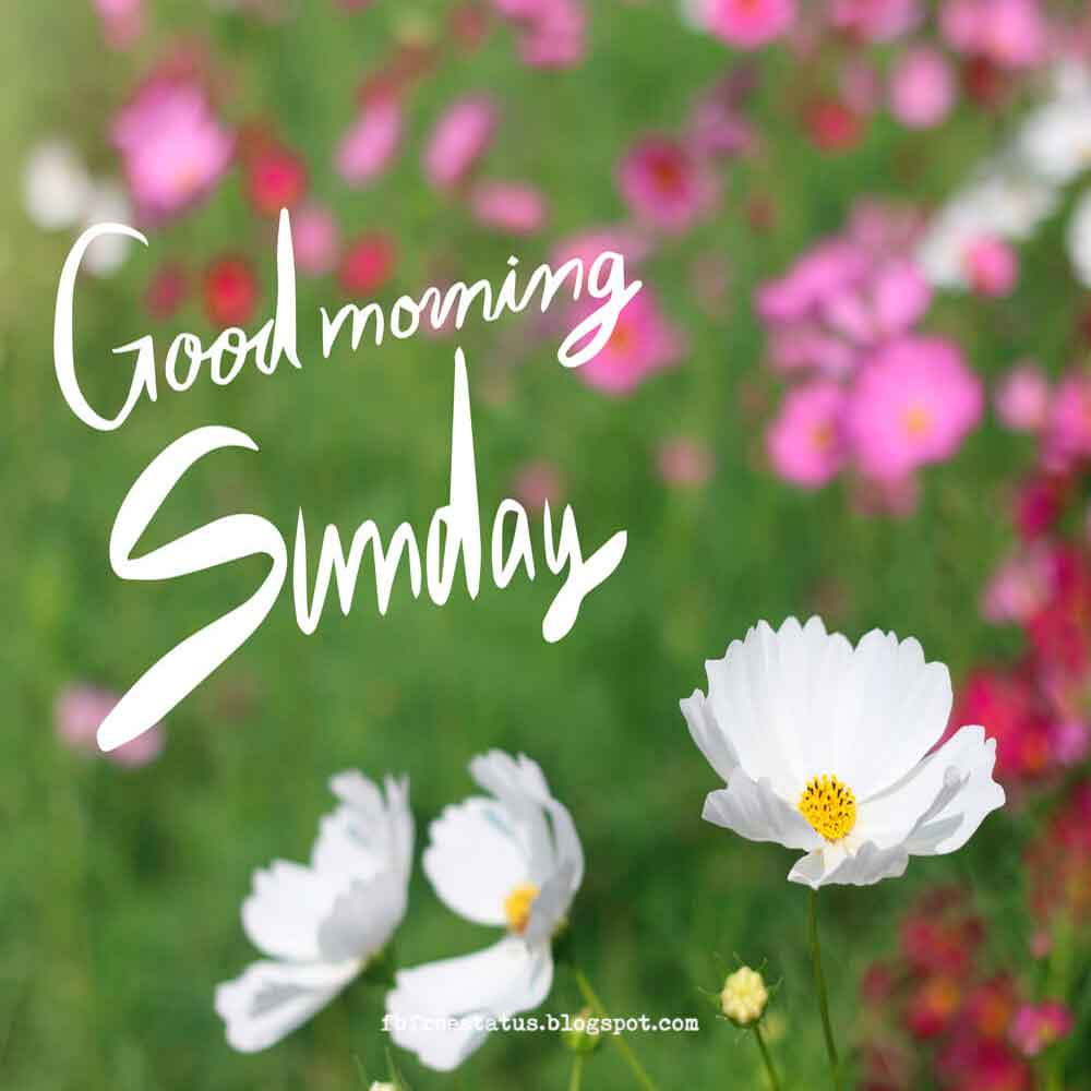 Good Morning Sunday Have a Nice Day.