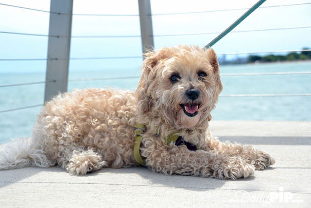Ruby visits Lake Michigan with her new family because rescue matters