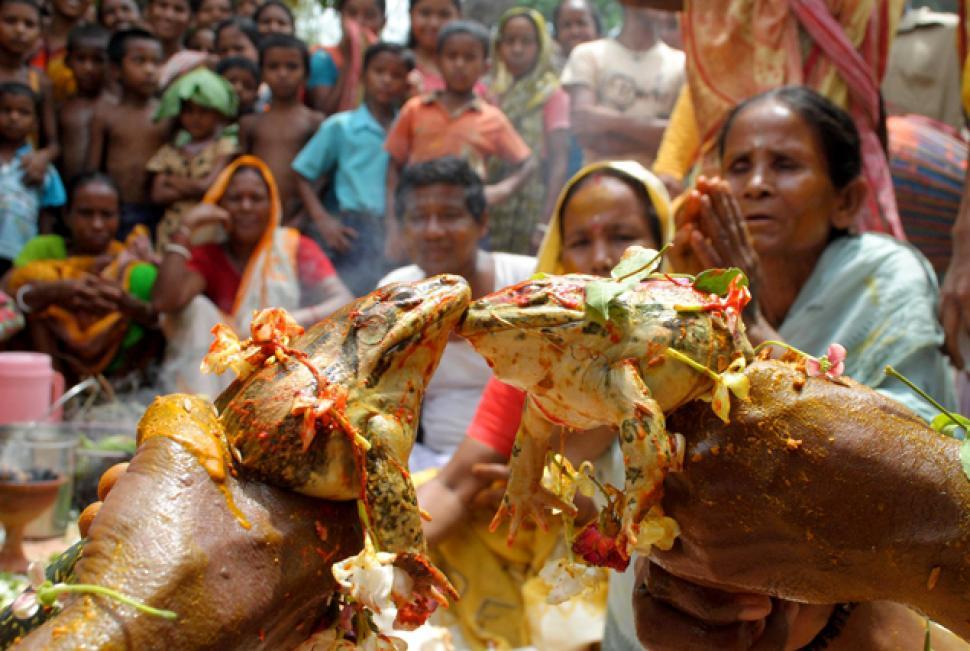 The Amazing World : Frog Marriage, Rongdoi Village, Assam, India