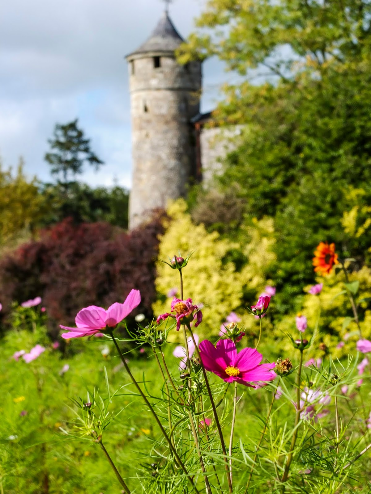 Pink cosmos flowers in front of a round Cahir Castle tower.
