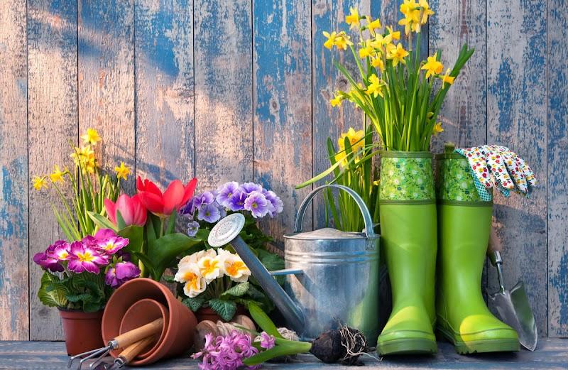 6 Tip Untuk Menjadi Pekebun Bandar