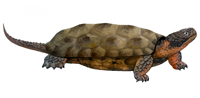 Ancient toothed turtles survived until 160 million years ago