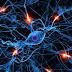 Γιατί οι ηλικιωμένοι αντιμετωπίζουν γνωστική πτώση παρά τη δημιουργία νέων κυττάρων εγκεφάλου