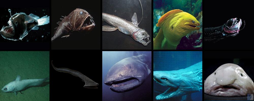 Ikan Dasar Laut