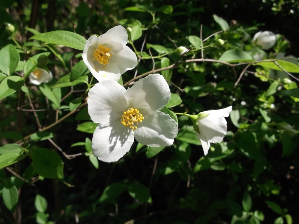White Flower With Yellow Center Tree Flowers Online 2018 Flowers
