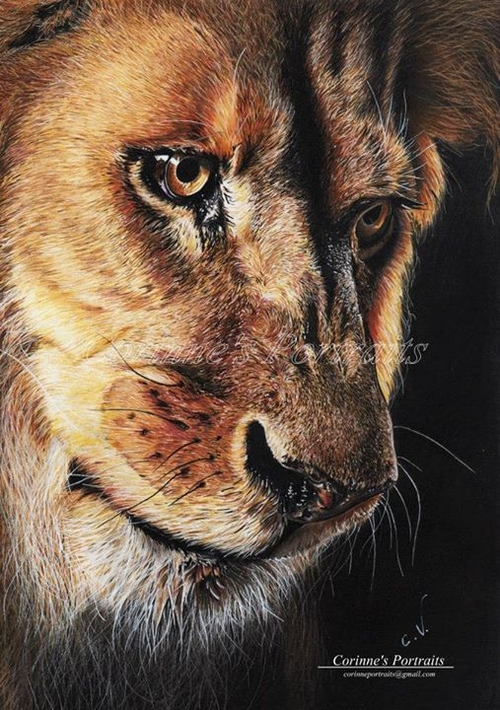 23-Lion-Corinne-Vuillemin-WIP-Color-Drawings-of-Actors-and-Animals-www-designstack-co
