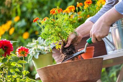Truco mantener jardín hermoso