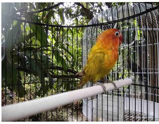 Tips Menjemur Burung yang Benar