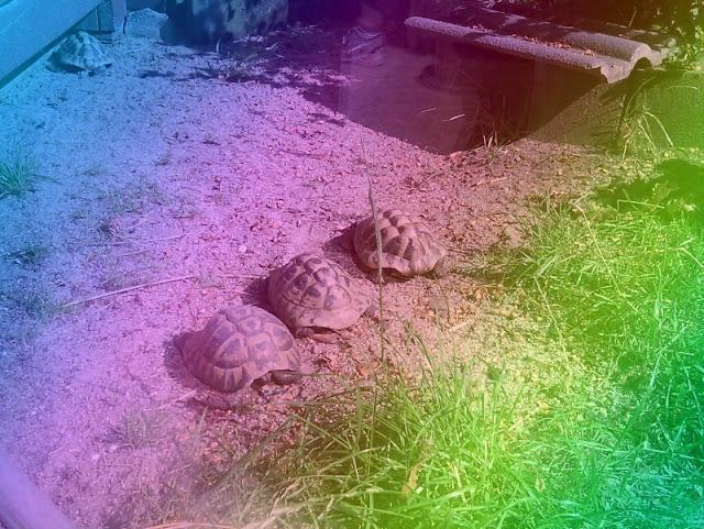 Perspektiven eines Küstenjungen (+ Verlosung): Schildkröten mal in Regenbogenfarben - ein Effekt der Kinder-Kamera.