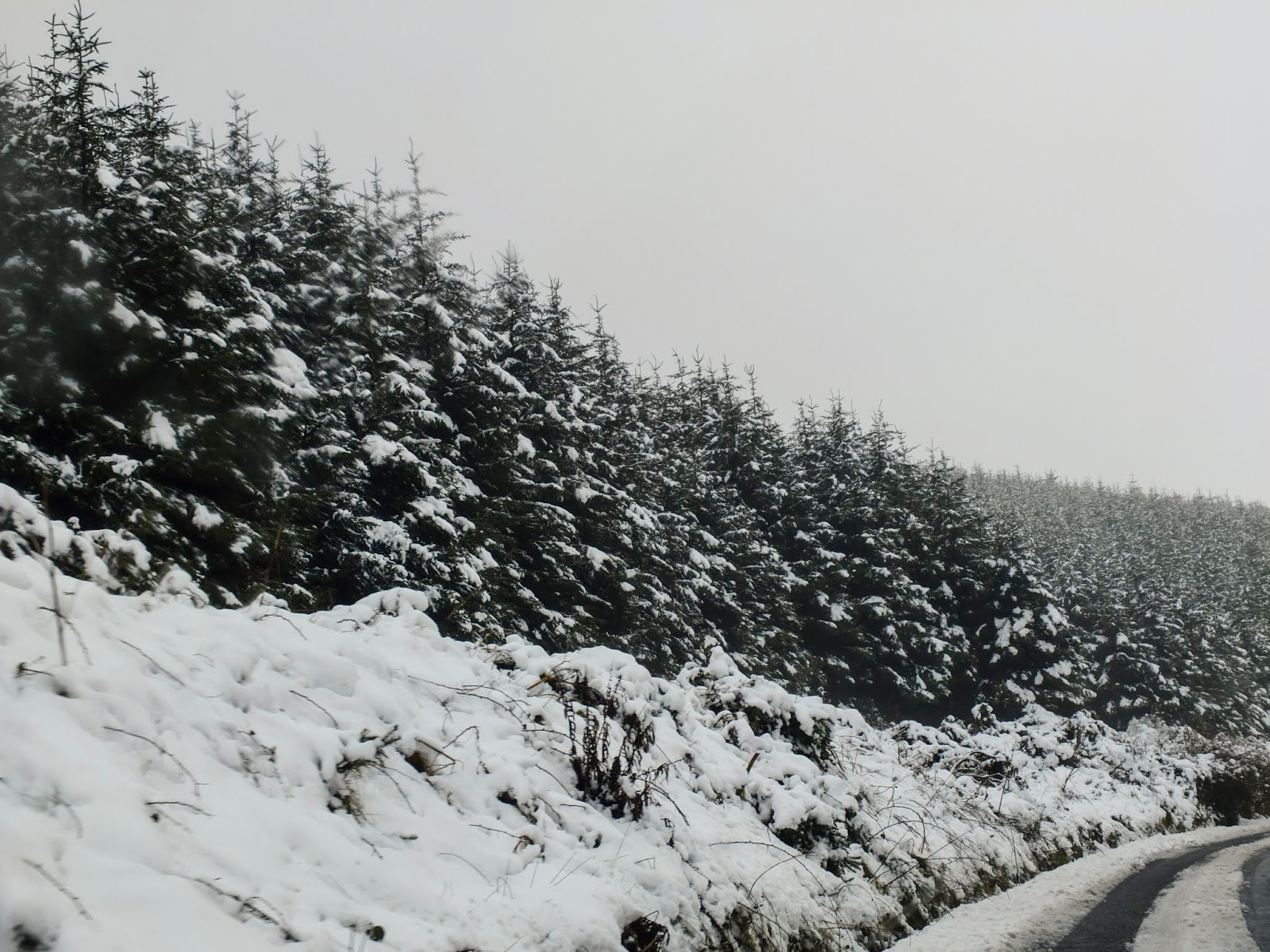 Snowy conifers on the side of the road in Duhallow.