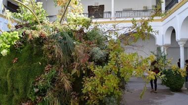 Instalaciones florales en 6 patios institucionales de Córdoba. Así fue FLORA 2018