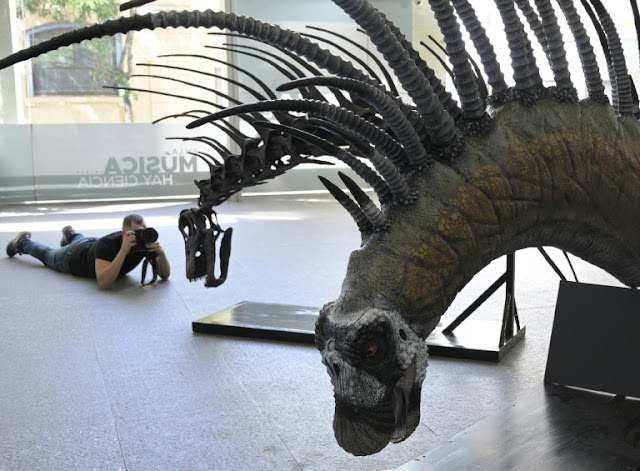 Dinosaur that defended itself with spiny backbone found in Patagonia