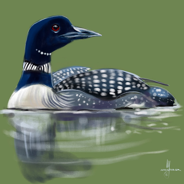 Common Loon bird painting by Artmagenta
