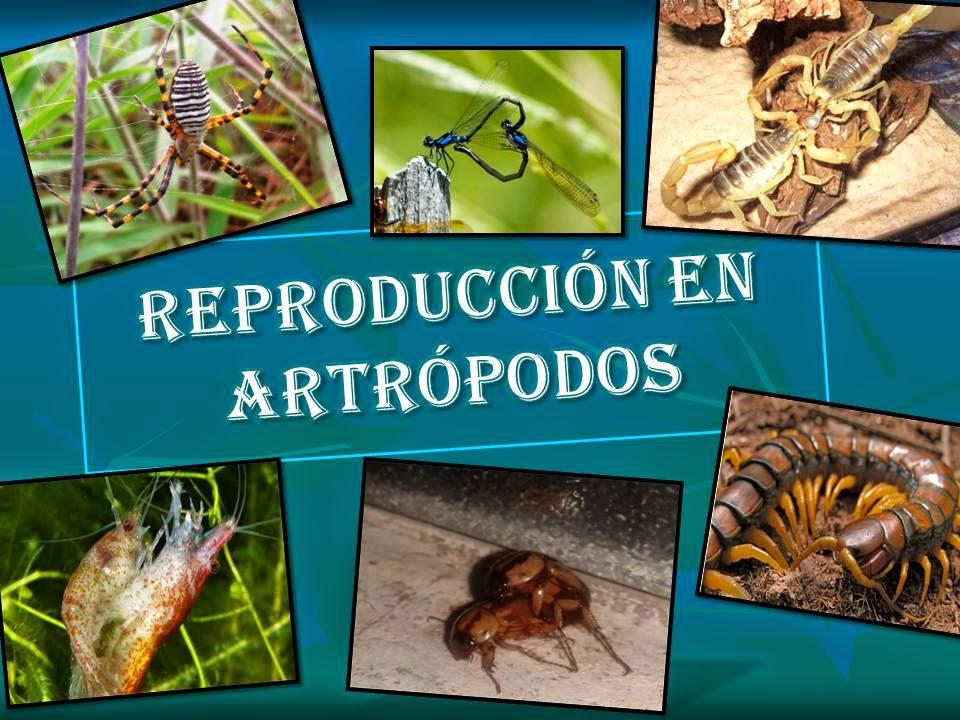Artropodos tipo de reproduccion asexual