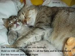 funny good night with cats image
