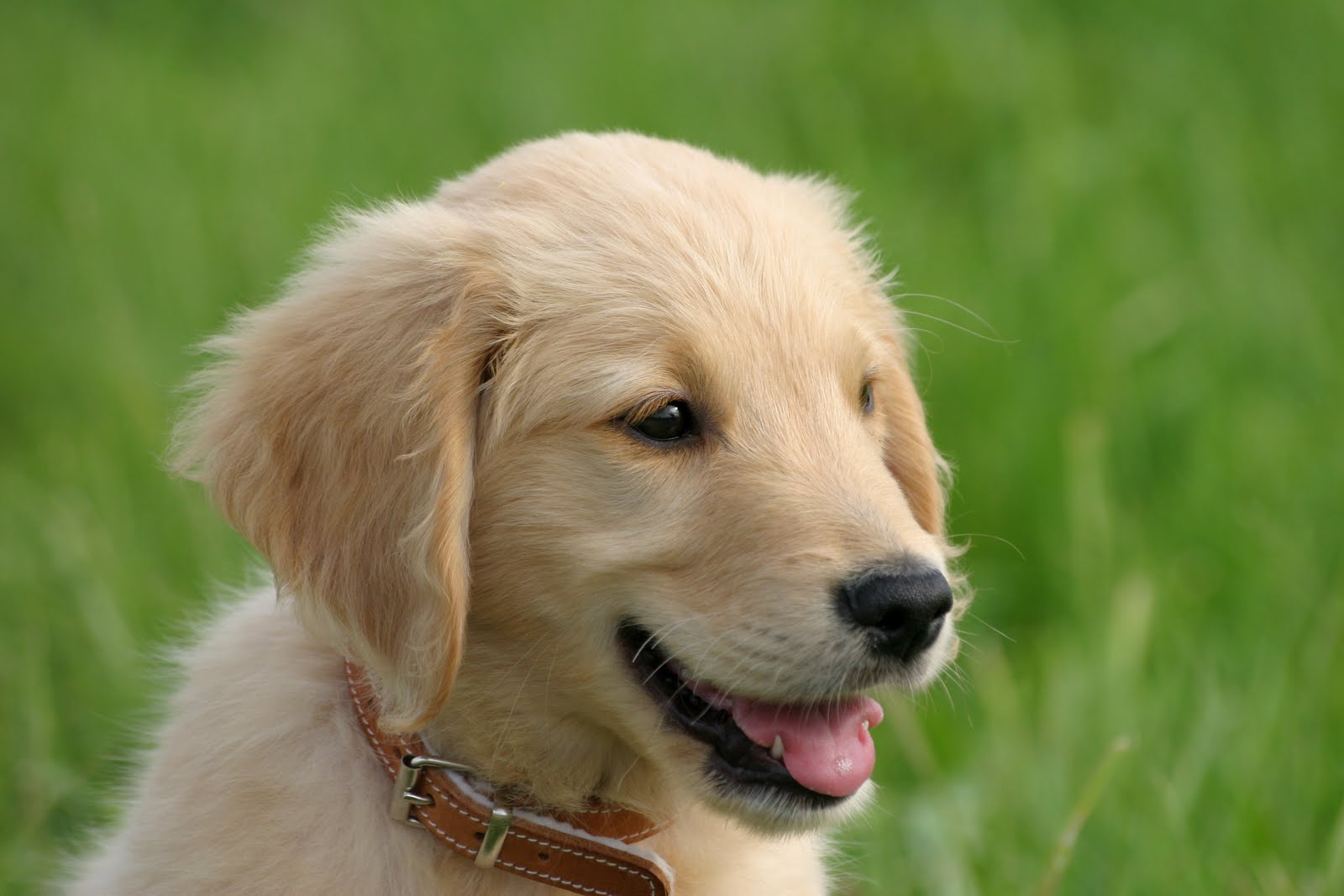 Friendly Puppy Pictures