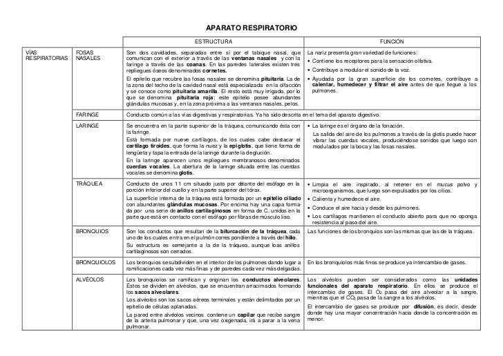 Tema 7 El sistema respiratorio y el aparato fonador - Anatomía ...